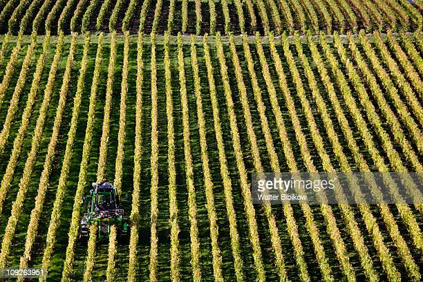 Oger, town and vineyards