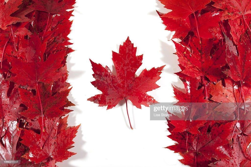 Oh Canada : Stock Photo