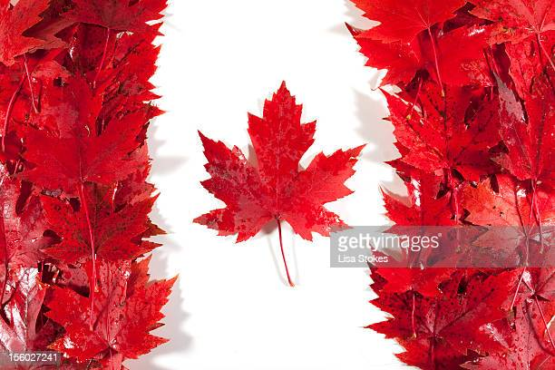 oh canada - canadian flag stock pictures, royalty-free photos & images