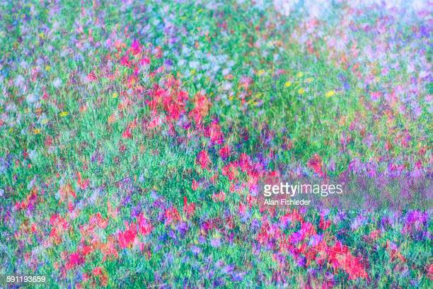 oh sweet pea - impressionism stock photos and pictures