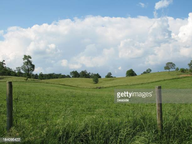 Ohio Meadow Landscape