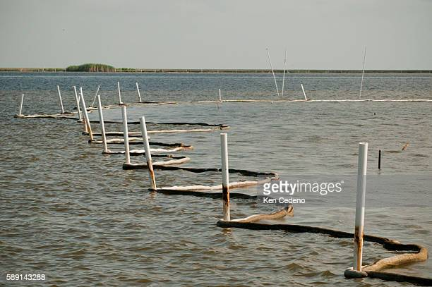 Oil absorbent booms soak up oil from the Deepwater Horizon oil spill and in Bay Jimmy LA July 14 2010   Location Bay Jimmy Louisiana USA