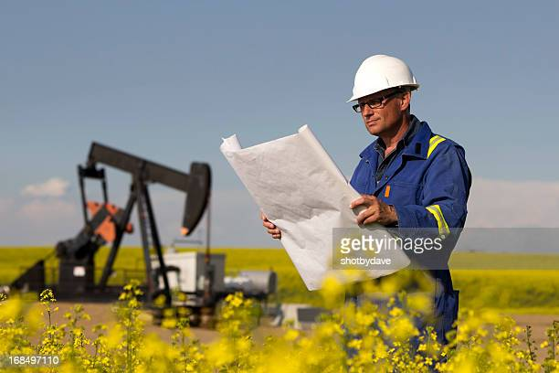 Oil Engineer and Canola