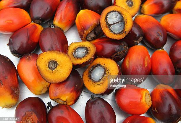 Oil palm fruit is displayed for a photograph at the Felda Global Ventures Holdings Bhd palm oil plant in Besout Perak Malaysia on Wednesday July 4...