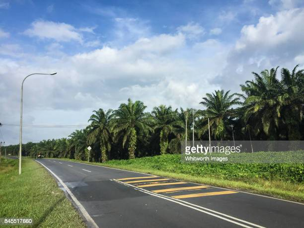 Oil palm plantation beside highway in Sabah, Borneo, Malaysia