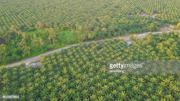 Oil palm plantations in Malaysia