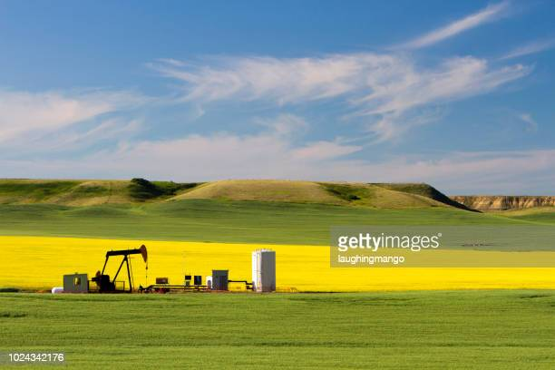 oil petroleum pumpjack alberta - oil field stock pictures, royalty-free photos & images