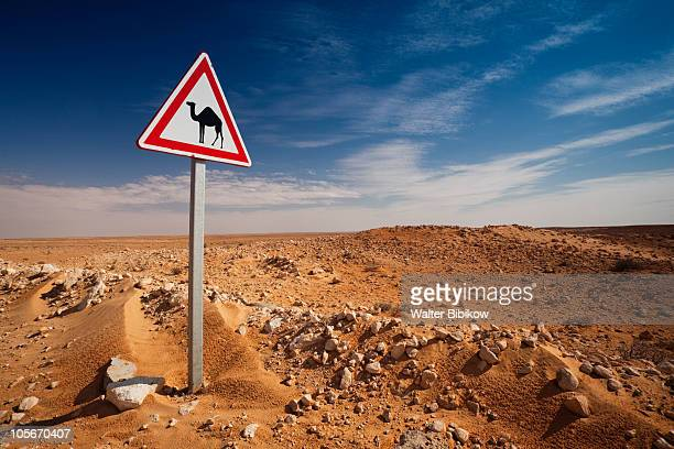 Oil Pipeline road with camel crossing sign
