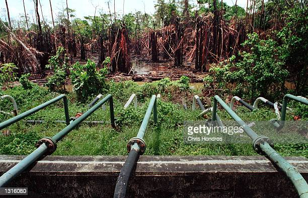 Oil pipelines lead out to a dead forest March 2001 at the Shell-owned Etelebu flow station in Etelebu, Nigeria. Nigeria is the world''s sixth leading...