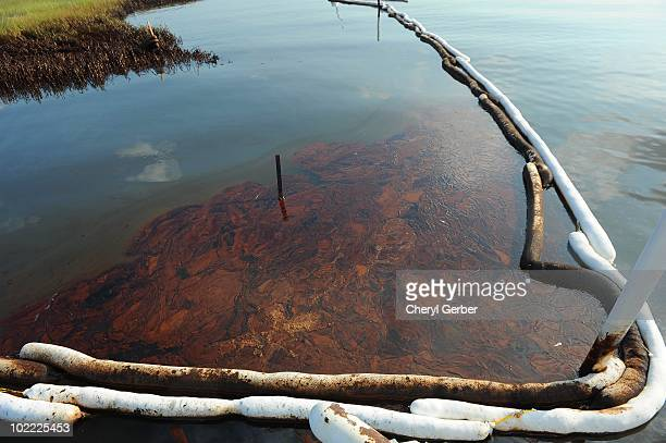 Oil pools in between booms in Barataria Bay June 19 2010 near Grand Isle Louisiana The BP oil spill has been called one of the largest environmental...