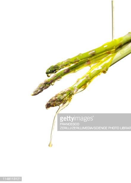 oil pouring on asparagus spears - spear stock pictures, royalty-free photos & images