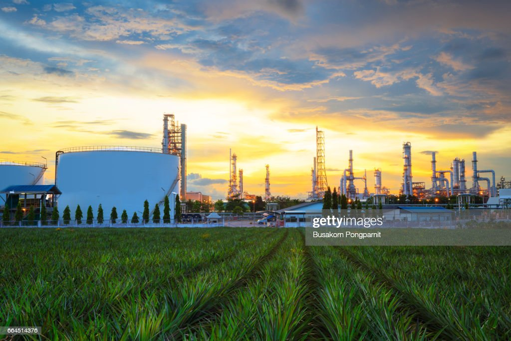 Oil refinery industry at twilight : Stock Photo