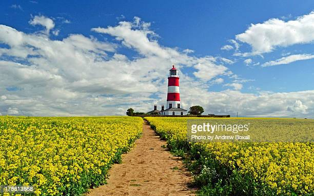 oil seed rape at happisburgh lighthouse - east anglia stock pictures, royalty-free photos & images