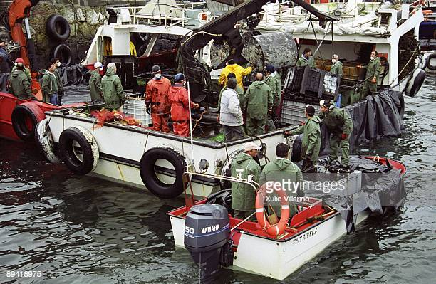 Oil slick caused by the Prestige ship Galicia Fuel contamination by Prestige ship in the Galician coast December 2004 Sailors cleaning from a ship in...
