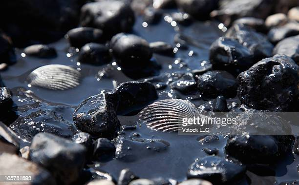 oil spill - oil slick stock pictures, royalty-free photos & images
