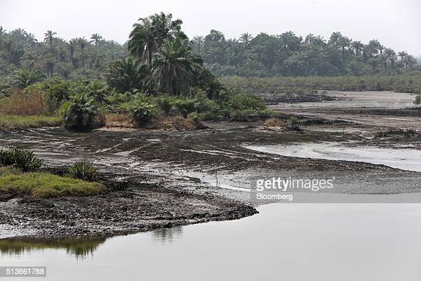 Oil stained mud banks sit on the site of an abandoned fish farm in a polluted creek in Bodo Nigeria Wednesday Jan 13 2016 Twenty years after the...