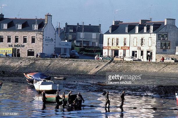 Oil-covered coast in Portsall due to the sinking of the Amoco Cadiz in Portsall, France in March, 1978.
