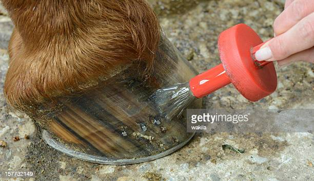 oiling the hoof
