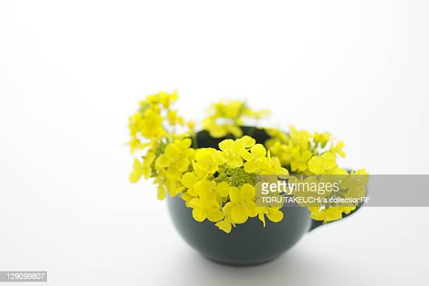 Oilseed rape in a cup
