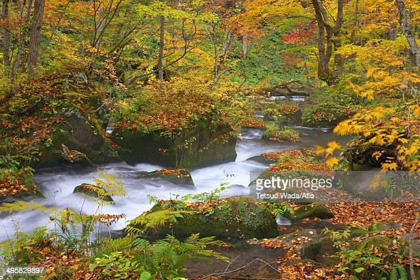 Oirase mountain stream, Aomori Prefecture, Japan