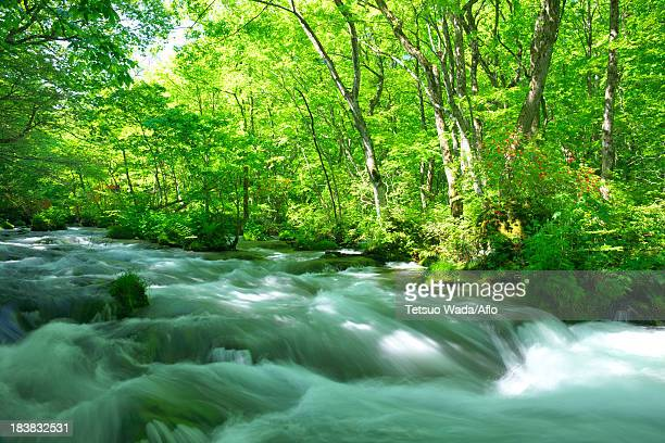 oirase mountain stream, aomori prefecture - may stock pictures, royalty-free photos & images