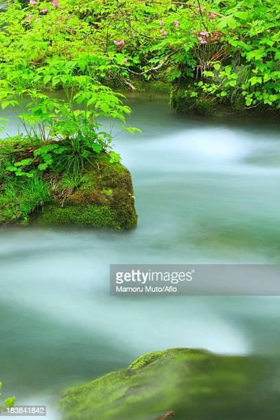 oirase mountain stream, aomori prefecture - heather brooke ストックフォトと画像