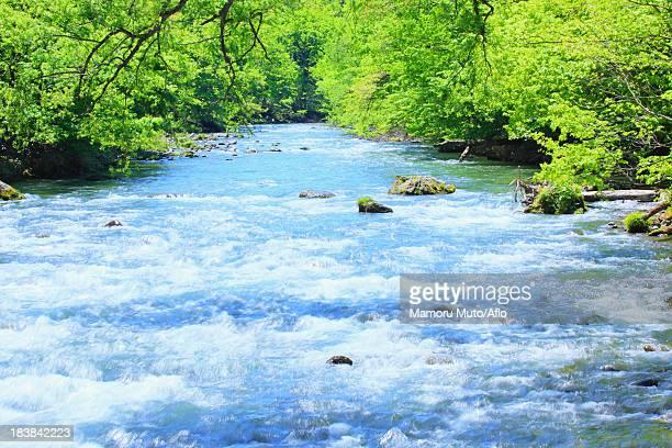 oirase mountain stream, aomori prefecture - 五月 ストックフォトと画像