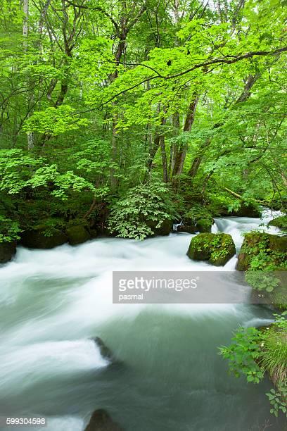 Oirase river, Aomori Prefecture, Honshu, Japan