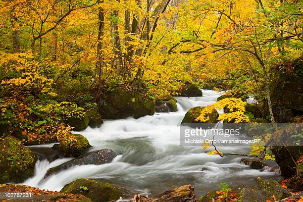 Oirase river during autumn. Towada, Aomori Prefecture, Japan