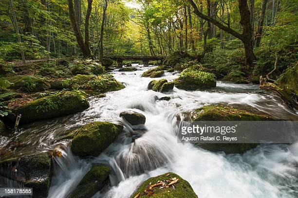 Oirase stream during Autumn