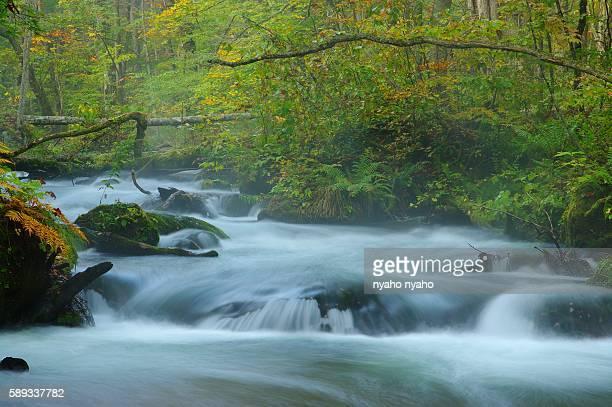 Oirase Stream Flowing Through Towada Hachimantai National Park. Towada, Aomori Prefecture, Japan