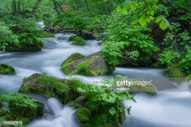 oirase stream in early summer - isogawyi stock pictures, royalty-free photos & images