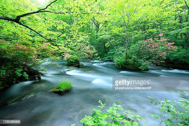 Oirase Stream in Forest