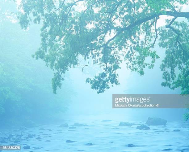 Oirase Stream in morning mist
