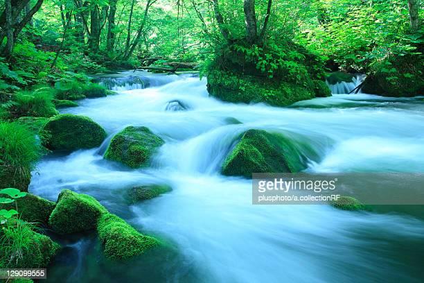 Oirase Stream, Long Exposure