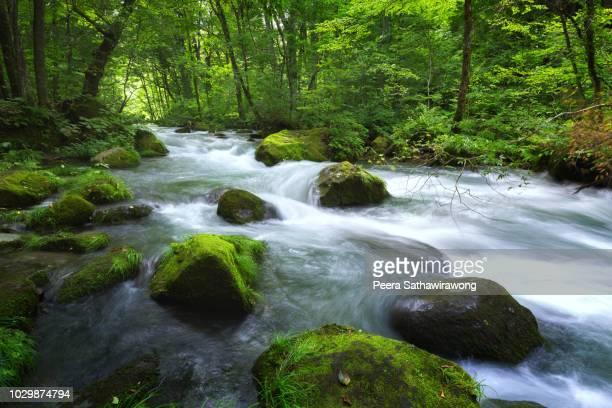 oirase stream - aomori prefecture stock pictures, royalty-free photos & images
