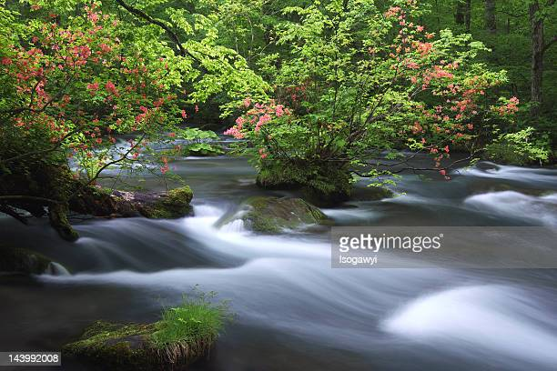 oirase stream - isogawyi stock pictures, royalty-free photos & images