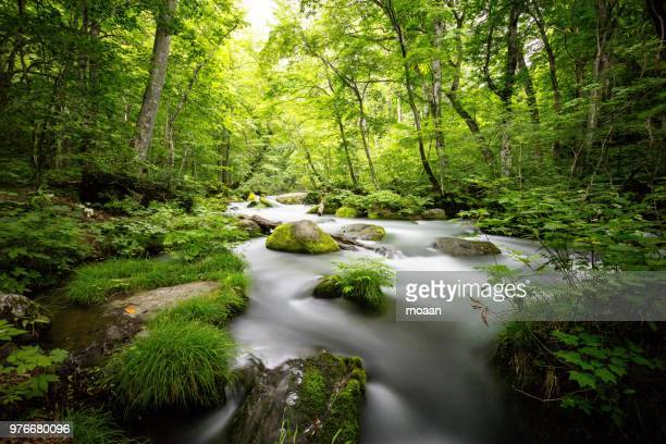 oirase stream - spring flowing water stock pictures, royalty-free photos & images