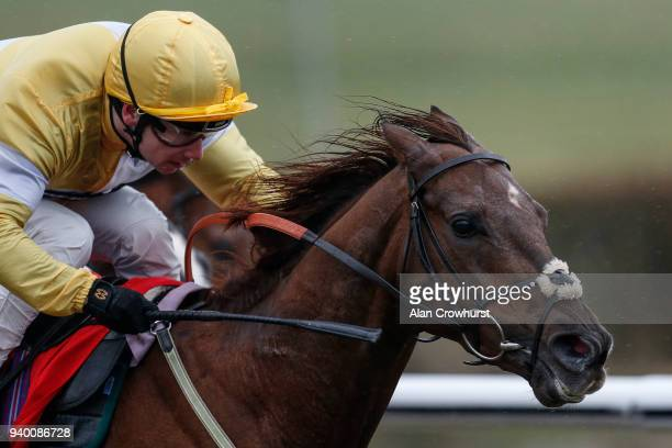 Oising Murphy riding Corinthia Knight win The 32Red 3 Year Old AllWeather Championships Conditions Stakes at Lingfield Park on March 30 2018 in...