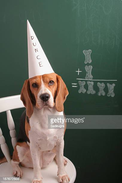 ok, i am not a mathematician - dunce's hat stock pictures, royalty-free photos & images