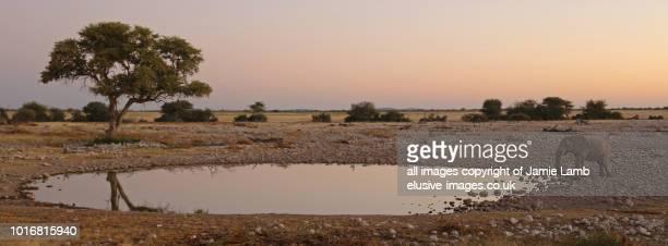 okaukuejo water hole with elephant at sunset, etosha national park - waterhole stock pictures, royalty-free photos & images