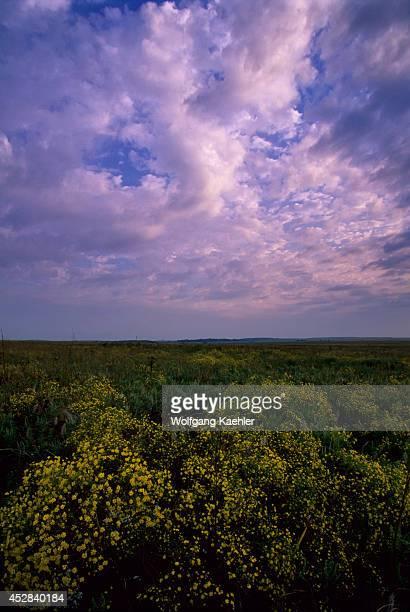 Oklahoma Near Pawhuska Tallgrass Prairie Preserve Broomweed And Ragweed Evening Clouds