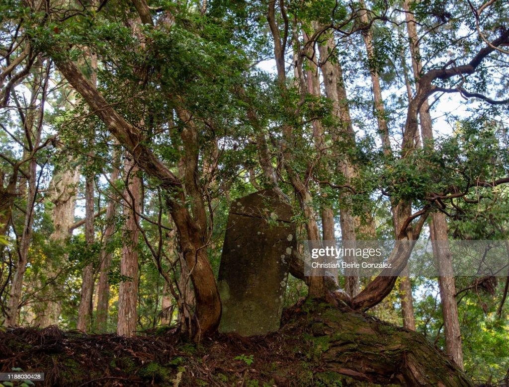 Okunoin Cemetery in Koyasan : Stock-Foto