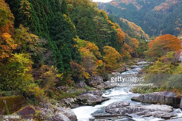 okutsu gorge, okayama prefecture, honshu, japan - präfektur okayama stock-fotos und bilder
