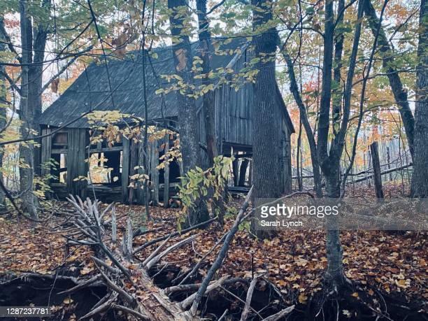 old abandoned barn through fall forest - オータムインターナショナル ストックフォトと画像