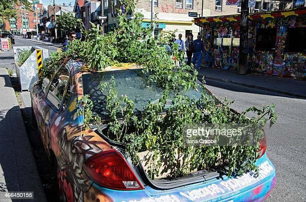 Old abandoned car sprouting tomato plants in the middle of Kensington Market, Toronto