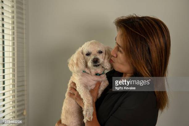 old asian woman holding senior poodle dog at home - 1 minute 50 ストックフォトと画像