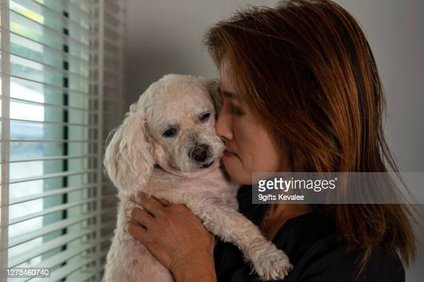 old asian woman holding senior poodle dog - 1 minute 50 ストックフォトと画像