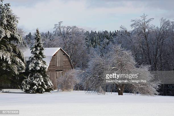 Old barn and apple tree covered in snow