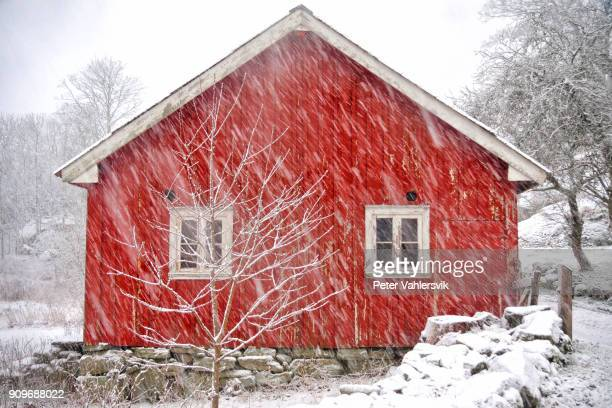 old barn in a gloomy winterstorm - elements stock photos and pictures